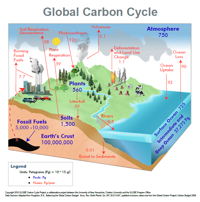 Globe carbon cycle project carbon cycle diagram ccuart